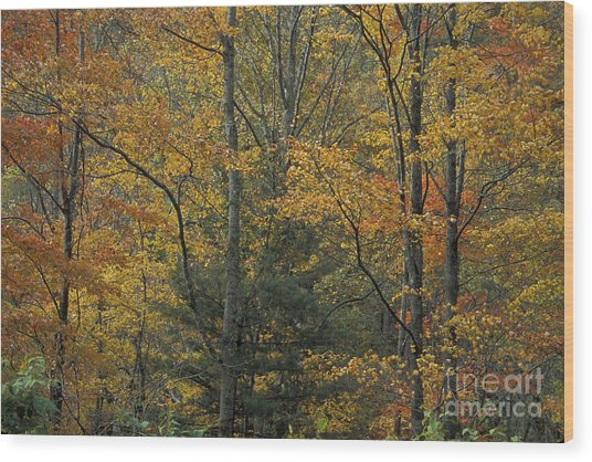 Blue Ridge Color Wood Print by Stan and Anne Foster