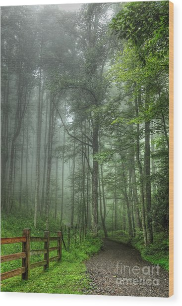 Blue Ridge - Trees In Fog Country Road I Wood Print