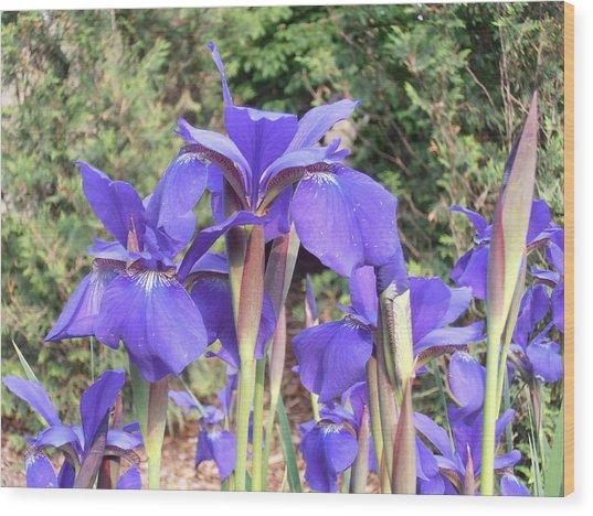 Blue Sentry  Wood Print