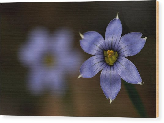 Blue Sixpetal Wood Print