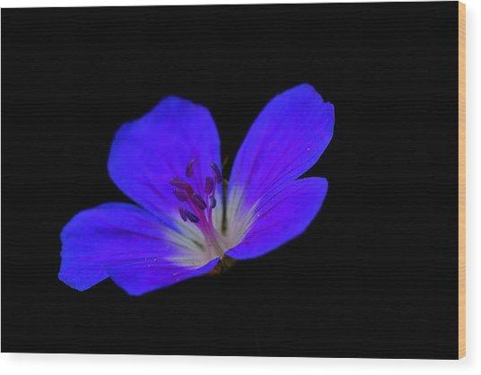 Blue Stamen Wood Print