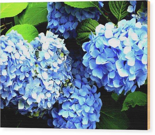Blue Sunshine Wood Print