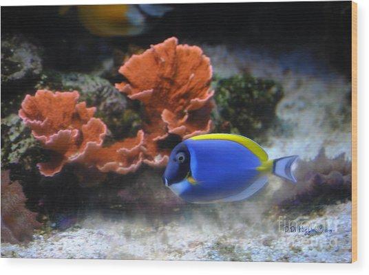 Blue Tang Fish And Coral Wood Print