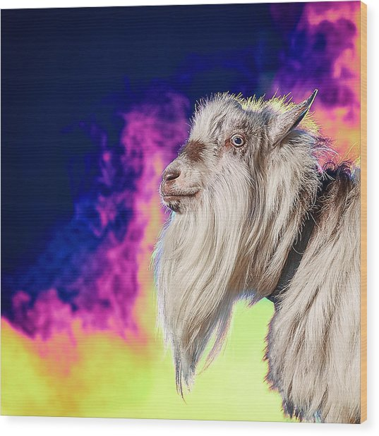 Blue The Goat In Fog Wood Print
