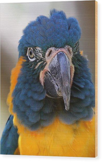 Blue-throated Macaw Close-up Wood Print