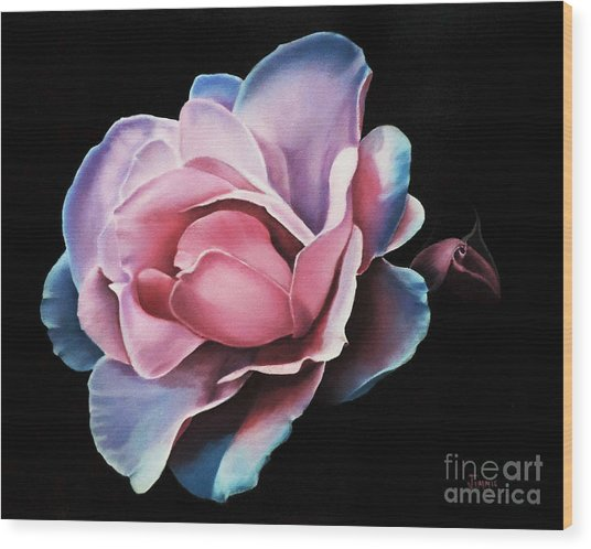 Blue Tipped Rose Wood Print
