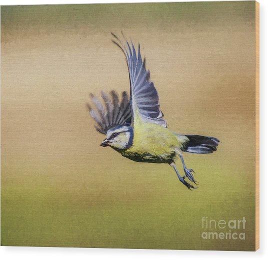 Blue Tit In Flight Wood Print