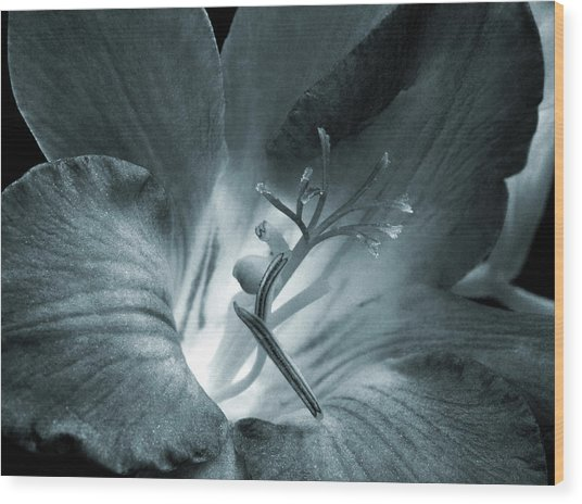 Blue Tone Freesia Wood Print by Terence Davis