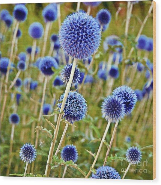 Blue Wild Thistle Wood Print