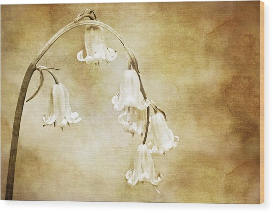 Bluebell Arch Wood Print