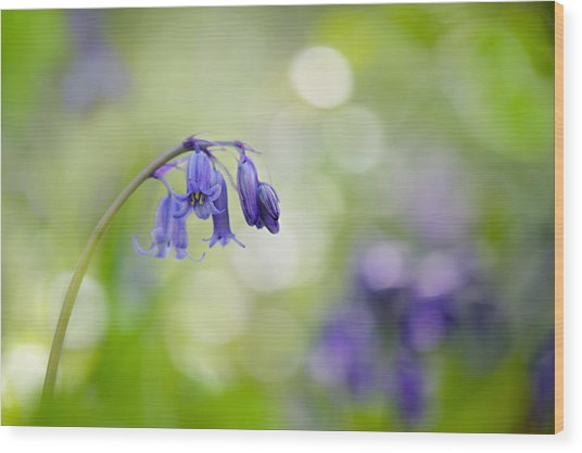 Bluebell Beauty Wood Print