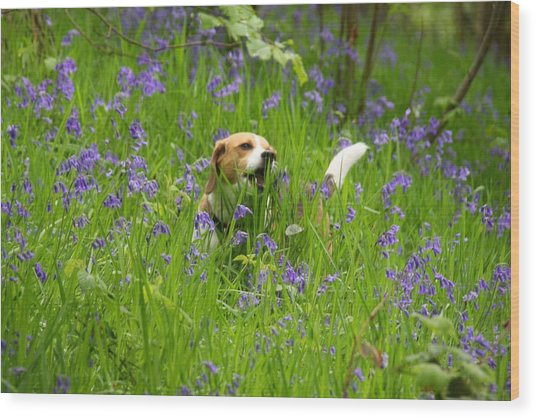 Bluebell Penny Wood Print