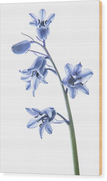 Bluebell Stem Wood Print
