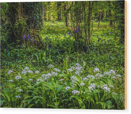 Bluebells And Wild Garlic At Coole Park Wood Print