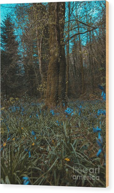 Bluebells In Lismore Forest 2 Wood Print