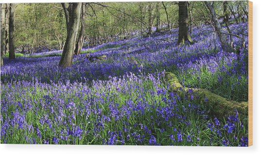 Wood Print featuring the digital art Bluebells by Julian Perry