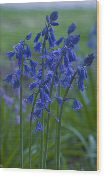 Bluebells Wood Print