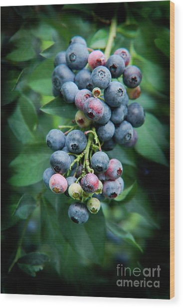 Blueberry Cluster Wood Print