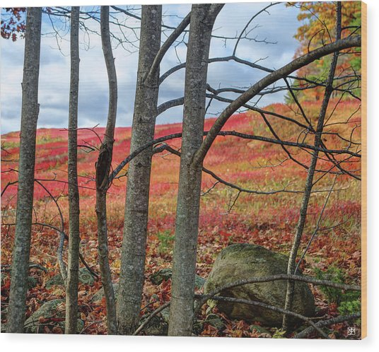 Blueberry Field Through The Wall - Cropped Wood Print