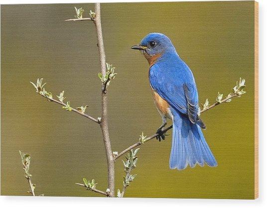 Bluebird Bliss Wood Print