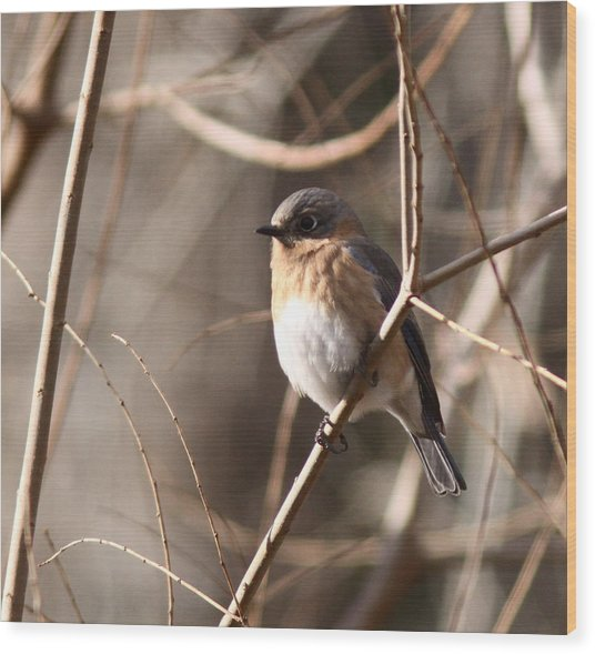 Bluebird In Beige Wood Print