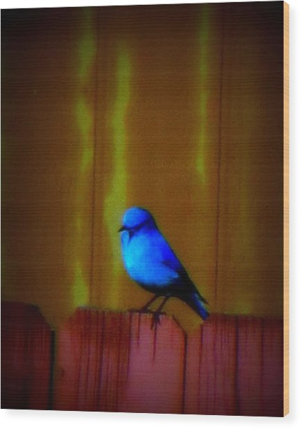 Wood Print featuring the photograph Bluebird Of Happiness by Karen Shackles