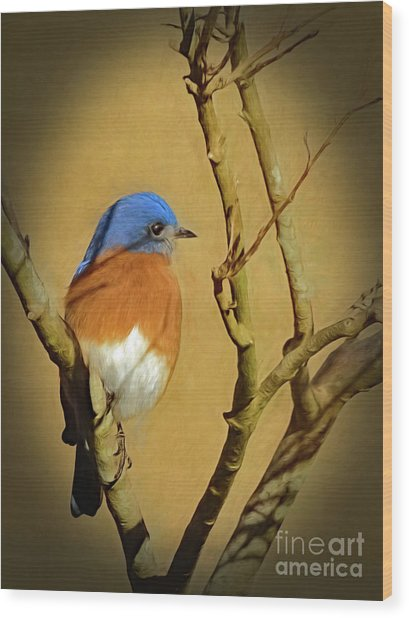 Bluebird Waiting For Spring Wood Print