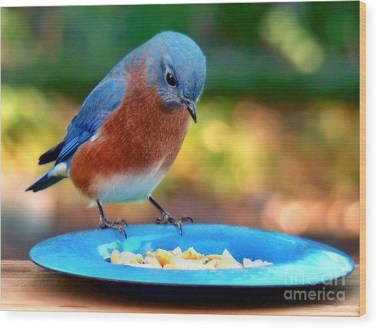 Bluebird's Dinner Wood Print