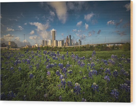 Bluebonnet City Wood Print