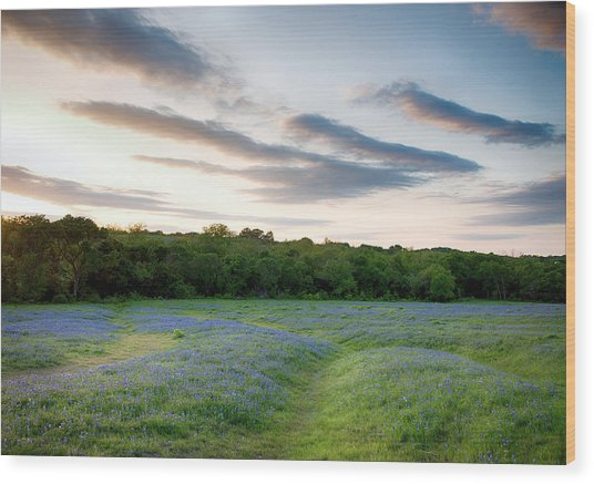 Bluebonnet Trail Ennis Texas 2015 V5 Wood Print