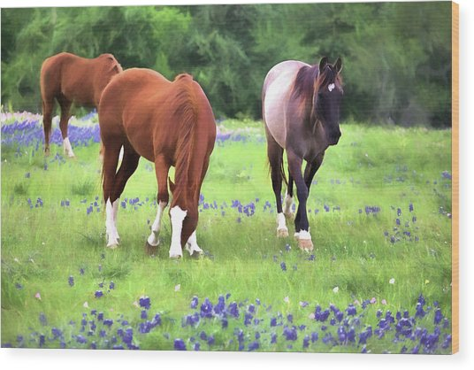 Bluebonnets And Horses Wood Print by JC Findley
