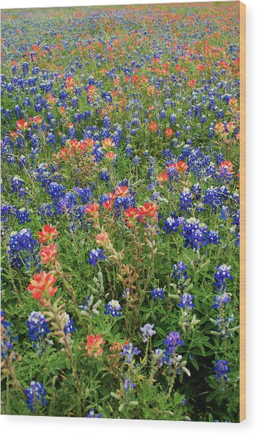 Bluebonnets And Paintbrushes 3 - Texas Wood Print