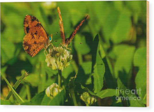 Bluehead Butterfly Wood Print