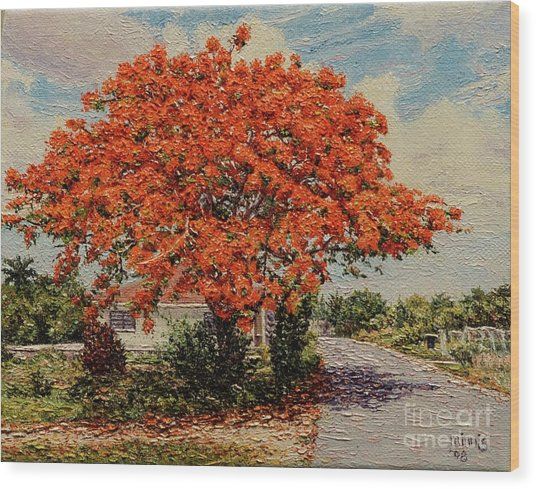 Bluff Poinciana Wood Print