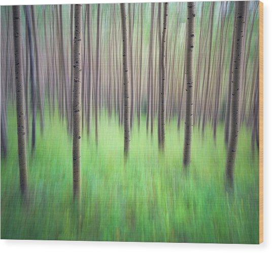 Blurred Aspen Trees Wood Print