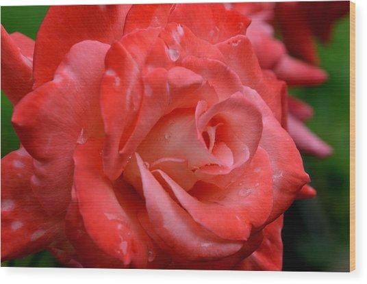 Blush After The Rain Wood Print