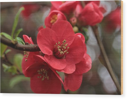 Blushing Blooms Wood Print