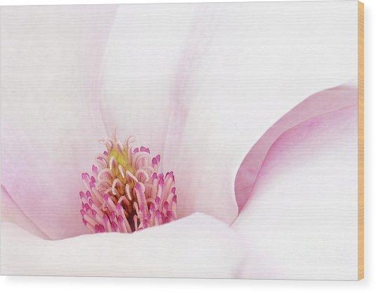 Blushing Magnolia Wood Print