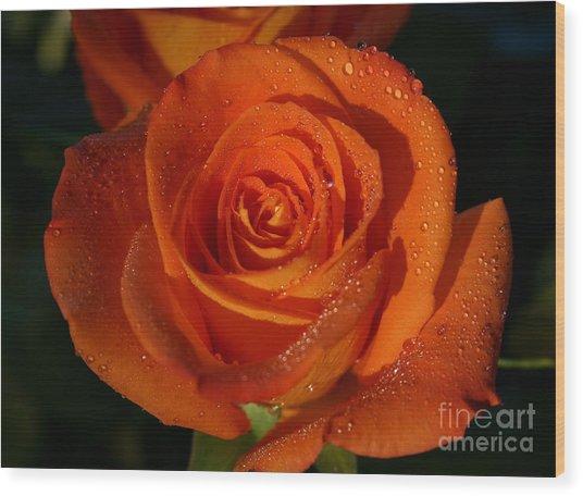 Blushing Rose Wood Print