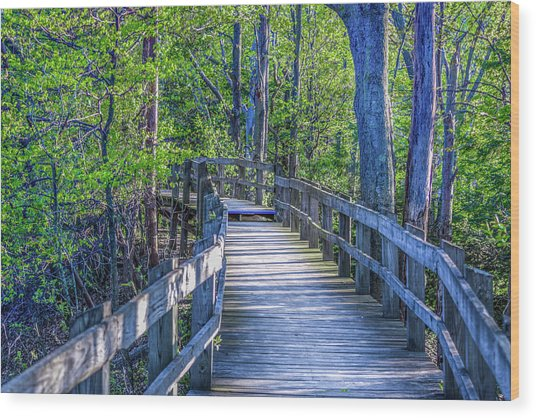Boardwalk Going Into The Woods Wood Print