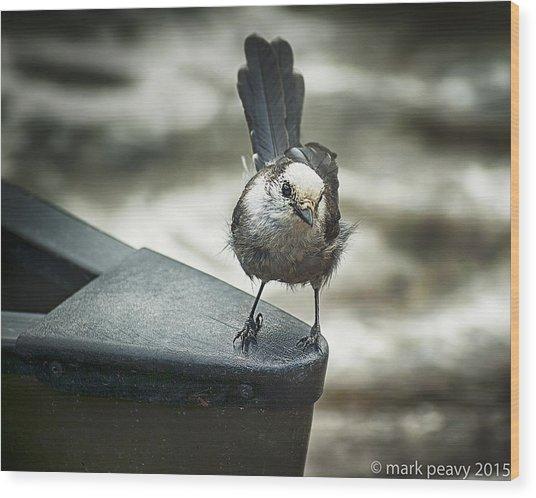 Boat Sparrow Wood Print