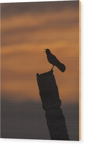 Boat-tailed Grackle At Sunset Wood Print