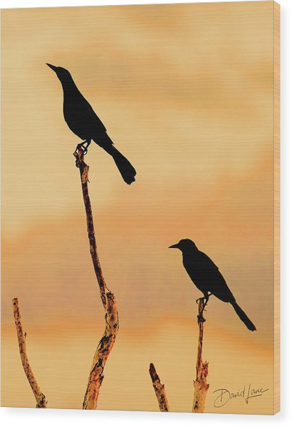Boat Tailed Grackles Wood Print