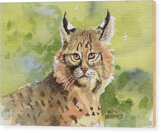 Bobcat Wood Print by Mimi Boothby