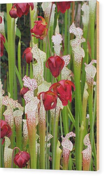 Bog In Bloom Wood Print