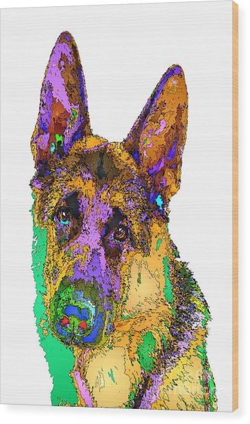 Bogart The Shepherd. Pet Series Wood Print