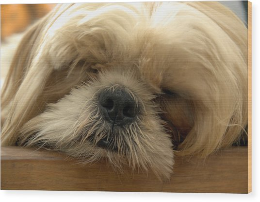 Bogie Asleep Wood Print