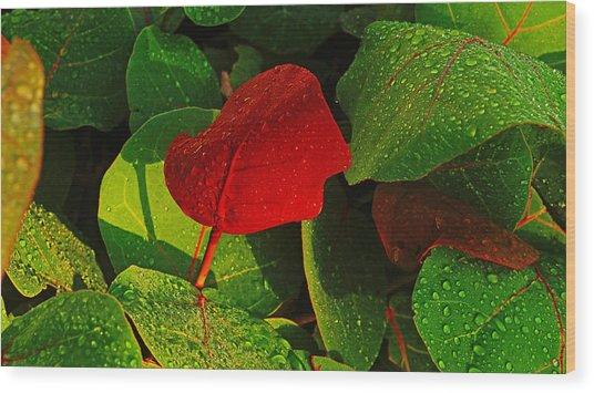 Bold Red Sea Grape Leaf Wood Print