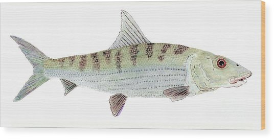 Bonefish Wood Print