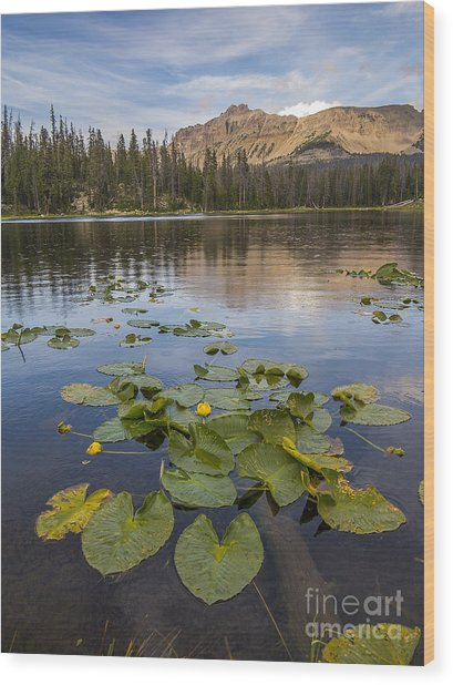 Bonnie Lake And Hayden Peak Wood Print